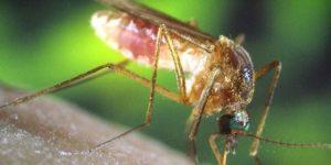 وباء حمى الضنك ينتشر في هندوراس