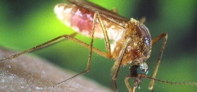 وباء حمى الضنك ينتشر في هندوراس السلالة المنتشرة هي الأكثر عدوانية والأكثر دموية