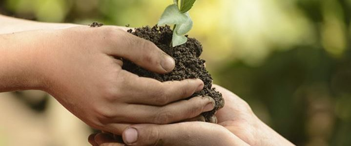 مفهوم الزّراعة وتأثيرها على اقتصاد الدول النامية