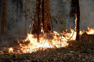 حرائق استراليا تخلف آثار كارثية