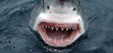 عندما تستخدم حنكتك تنقذ نفسك ، هذا ما أنقذ الرجل النيوزيلندي من أسنان سمكة القرش